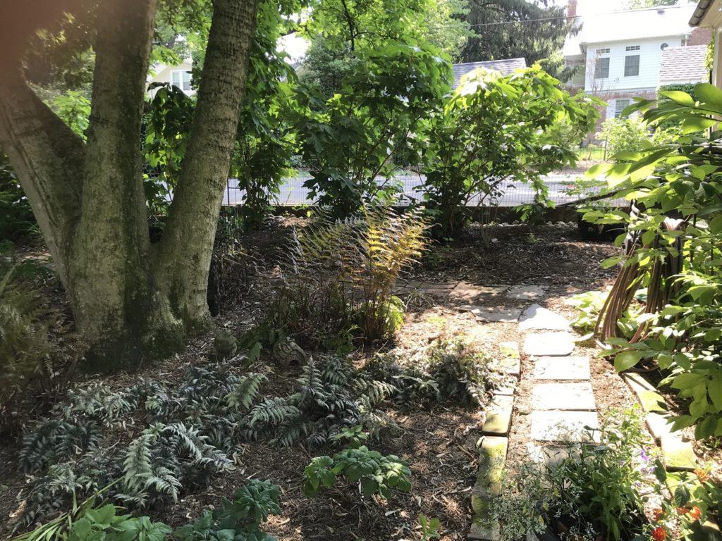 rock path through a garden
